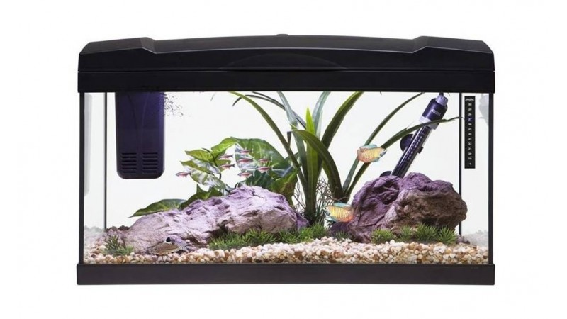 aquarium-marina-basic