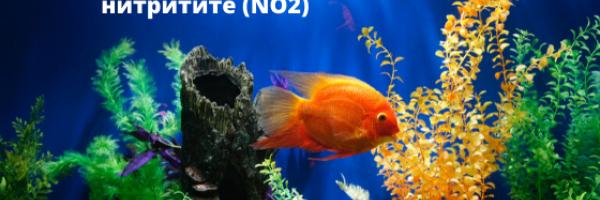 Dangerous values of nitrites in the aquarium - how to prevent them?
