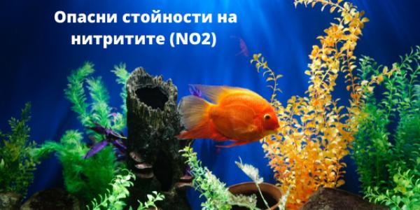 Опасни стойности на нитритите в аквариума – как да ги предотвратите?
