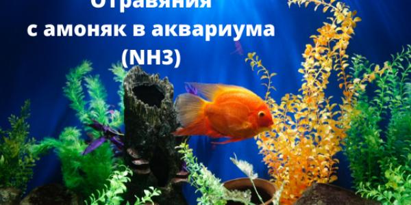 Внимание! Отравяния с амоняк в аквариума