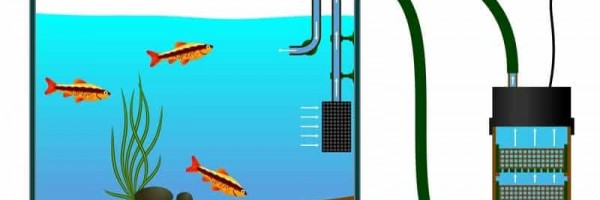 Types of filtration in the aquarium
