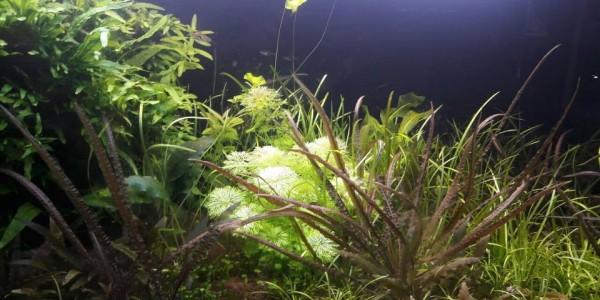 Съвети за по-добро качество на водата в аквариума