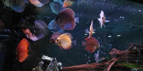 Рибките също се нуждаят от витамини