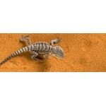 Пустинен пясък за терариум Exo Terra