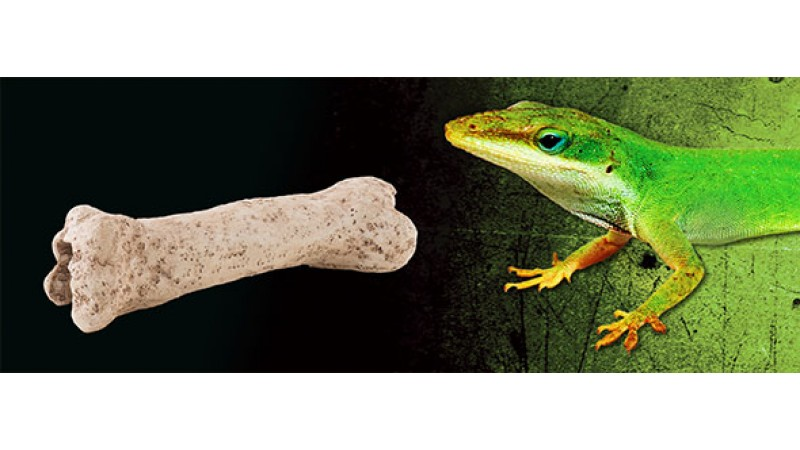 Exo Terra Dinosaur Bone декорация
