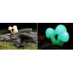 Exo Terra Glow Mushrooms декорация