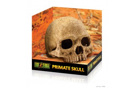 Exo Terra Skull decoration