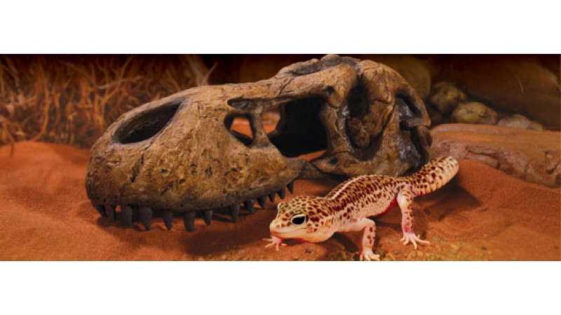 Декорация за терариум T-Rex Skull