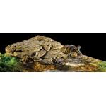 Магнитно островче за костенурки Exo Terra
