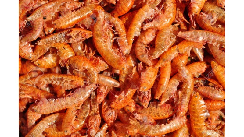 Frozen food Ruto Gammarus 100 g