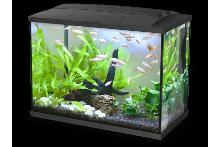Aquarium Hailea K30 + 3 gifts