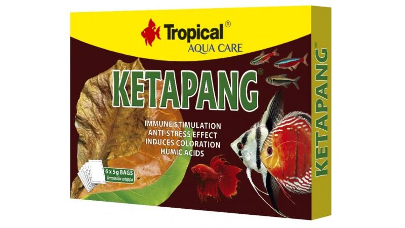Tropical KETAPANG - Sea almond leaves