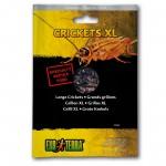 Консервирана храна Exo Terra Crickets XL
