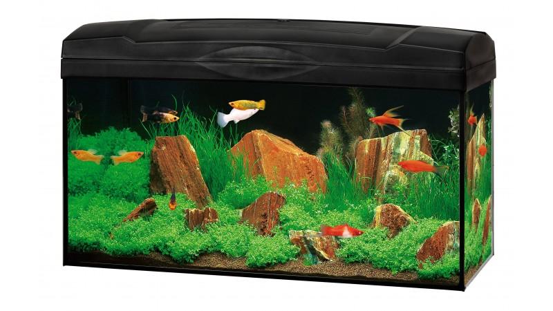 Aquarium Marina Basic 54
