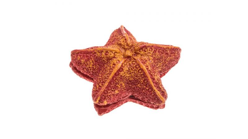 Почистващ Магнит AquaEL Морска Звезда