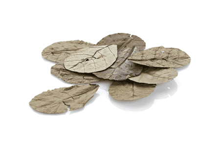 EHEIM Sea almond leaves