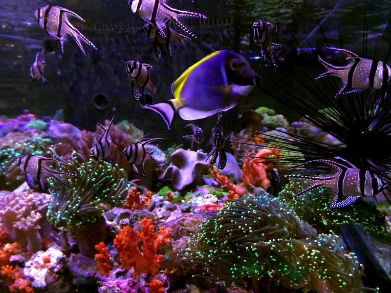 Магазин Aquarium.BG Южен Парк